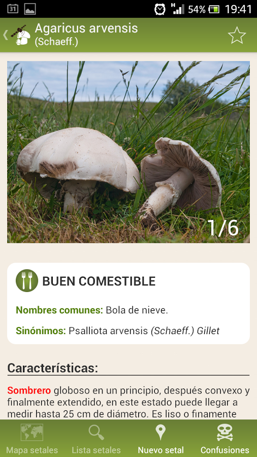 Fungipedia.es: La mejor información sobre setas
